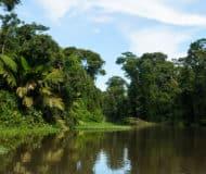 Reis door Tortuguero tijdens uw bezoek aan Costa Rica.