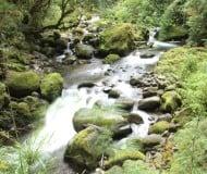 Wandel door het nevelwoud van Monteverde.
