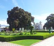 El Tule, rondreis Mexico.