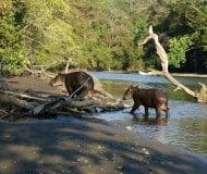 Reis Nationaal Park Corcovado