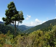 Nevelwoud San Gerardo de Dota Costa Rica