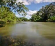 regenwoud belize