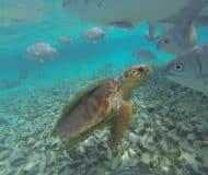 duiken snorkelen belize