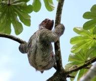 Wandelen door het Nationaal Park Corcovado, rondreis Costa Rica, Unico Travel