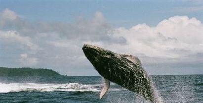 costa rica reizen walvis