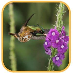 Vogelreis Costa Rica vogel