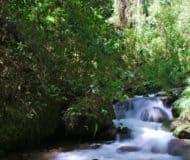 Nevelwoud San Gerardo de Dota