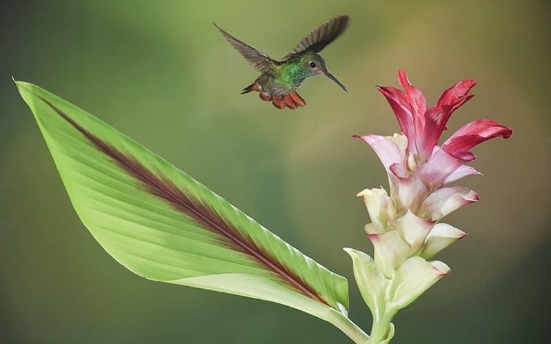 Kolibri Costa Rica