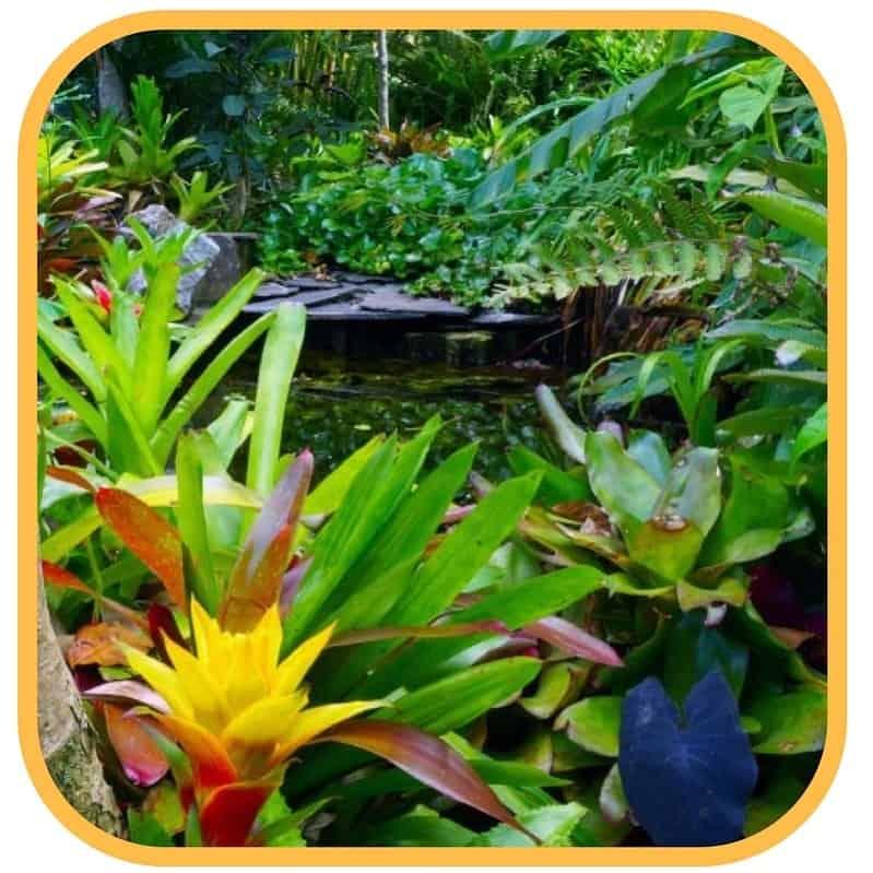 tropische tuin costa rica