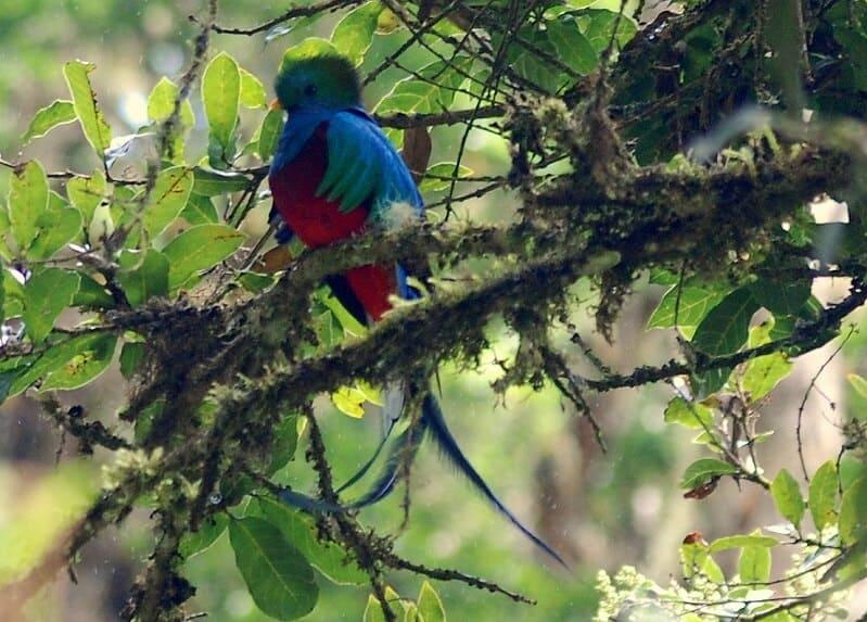 Quetzal tour Costa Rica