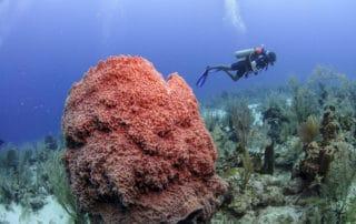 Duiken in Belize