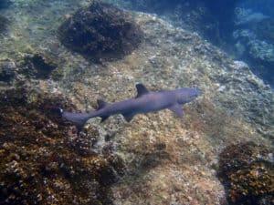 haaien costa rica