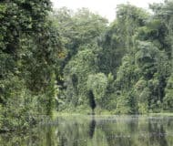 Tortuguero Jungle