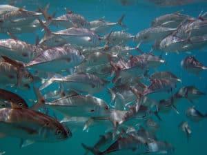 vissen cano island