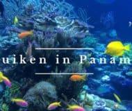 Duiken in Panama