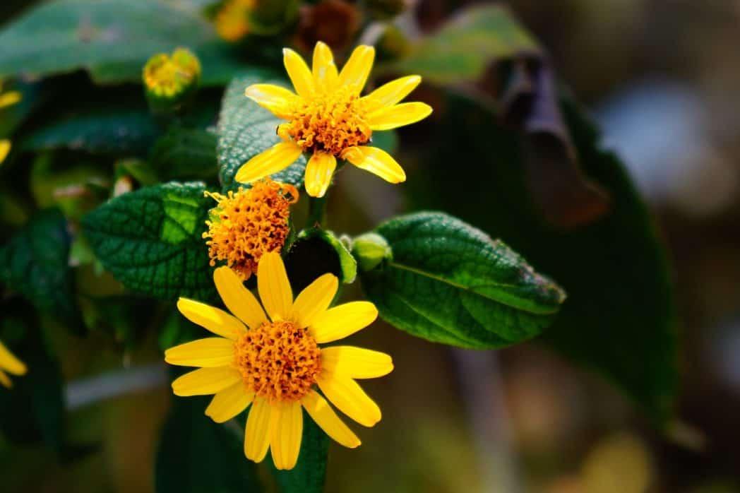 bloemenroute el salvador
