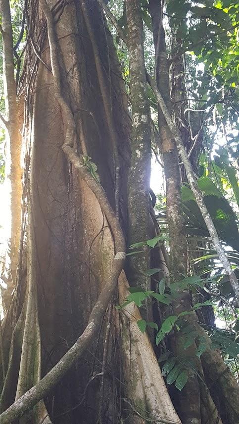 leguaan costa rica