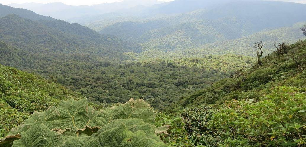 costa rica lokaal monteverde