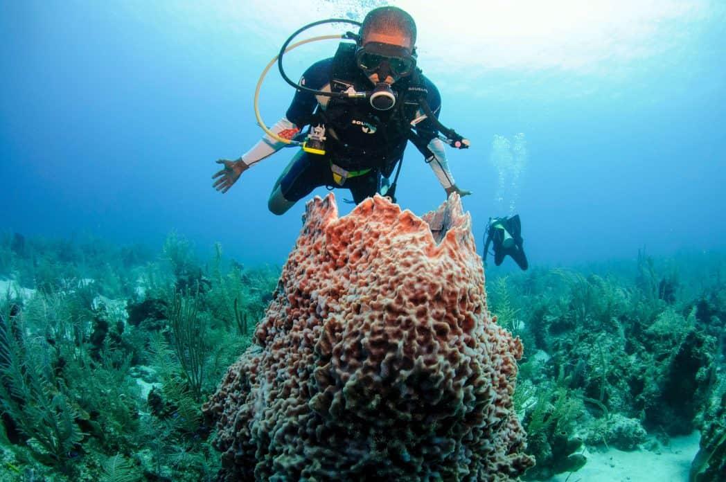 duiken the great blue hole belize belize tourism board