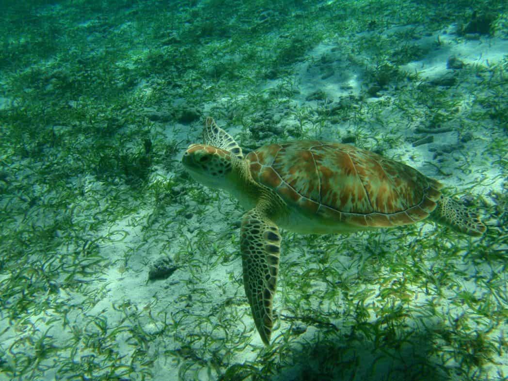 duiken the great blue hole belize schildpad belize tourism board