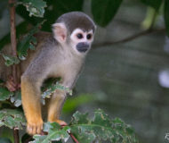 Amazone aap