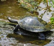Schildpad (fotocredits ProColombia)