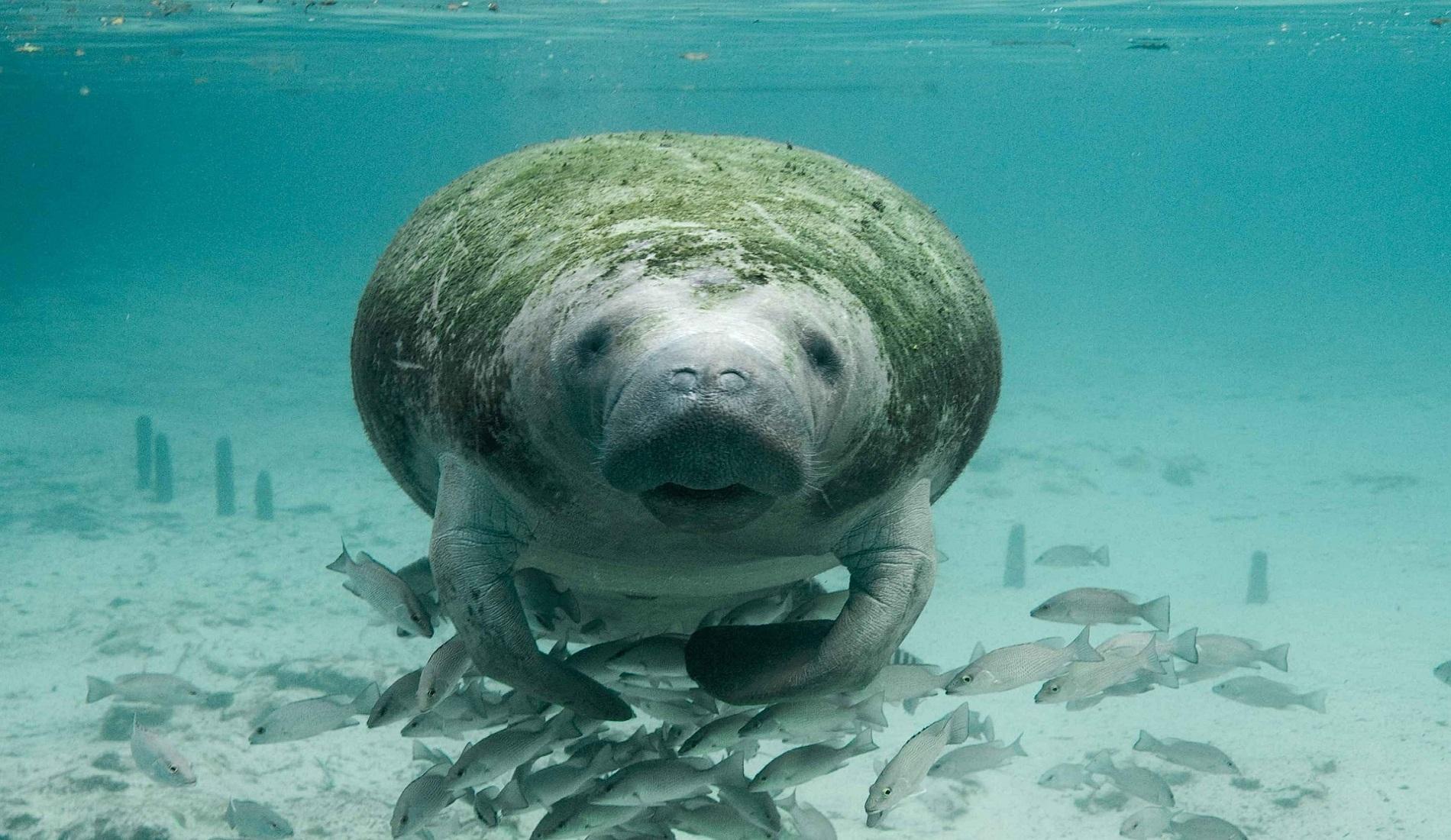 Belize reizen zeekoe