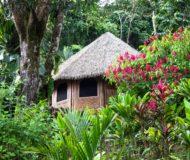 Bungalow regenwoud