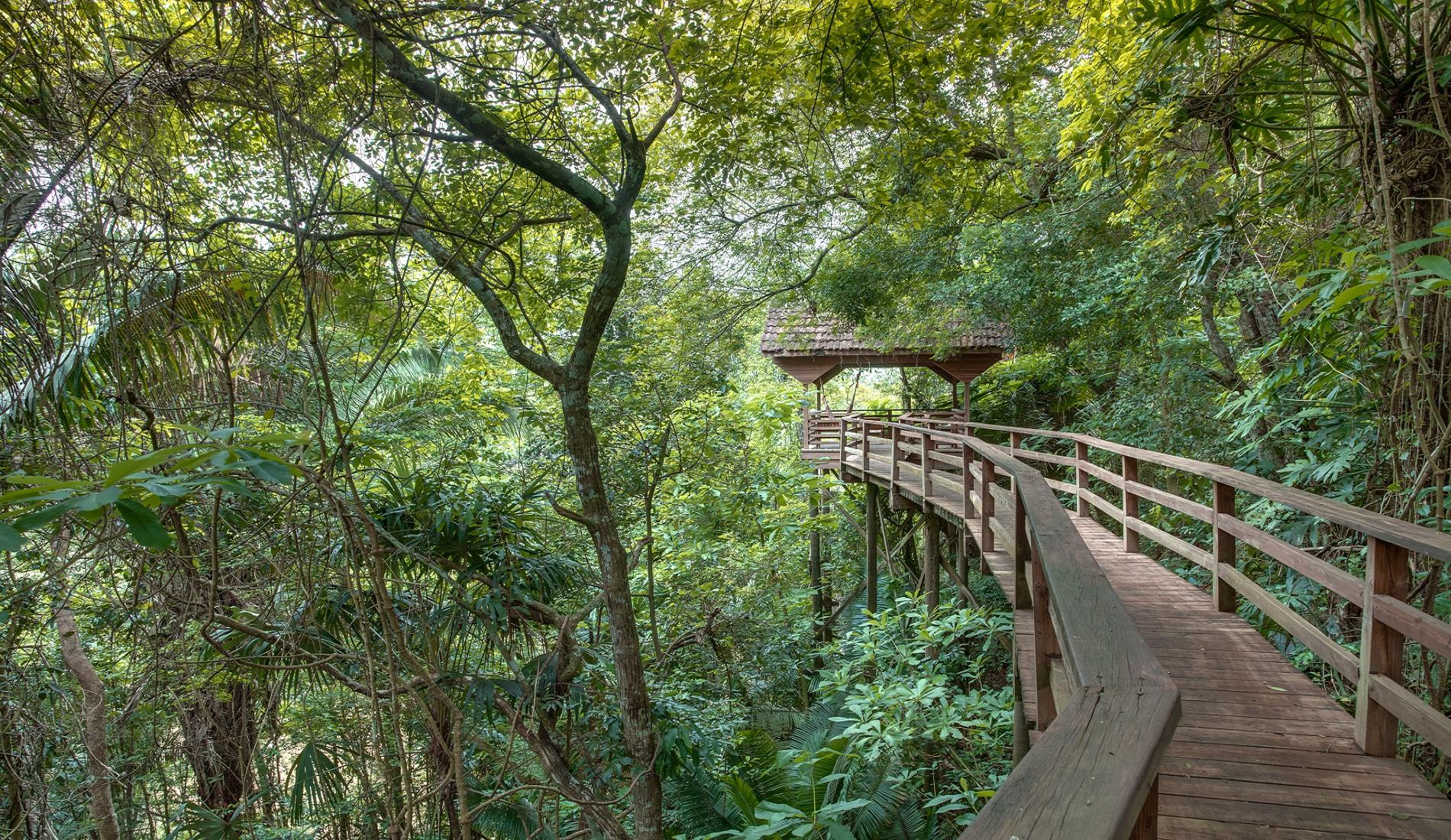 Canopy walk familiereis belize