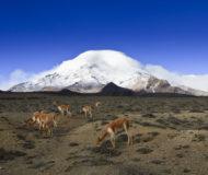 Reserva faunísta Chimborazo