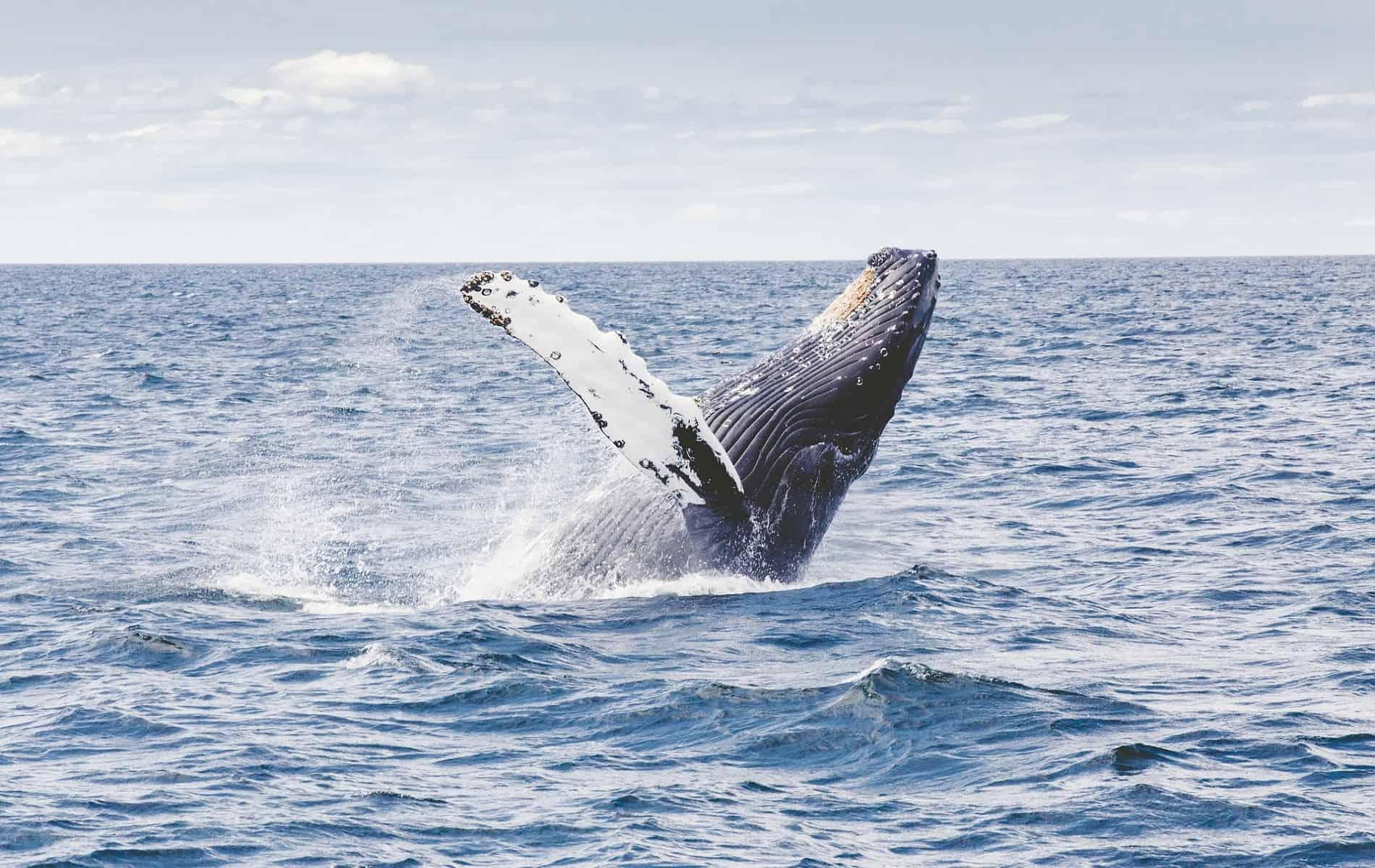 Costa Rica september reis walvis
