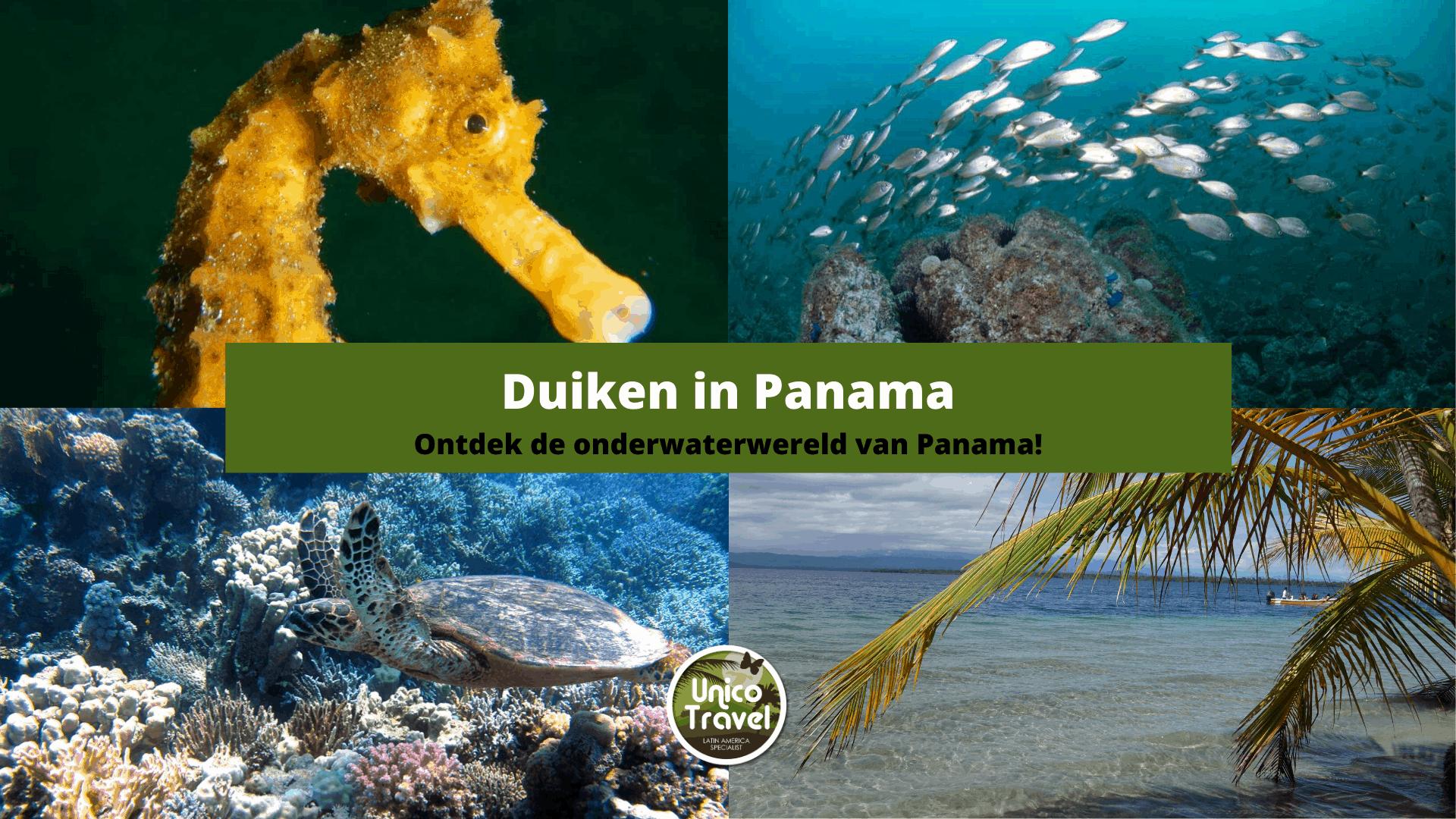 Duiken in Panama 66