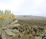 El Angel reserve Ecuador