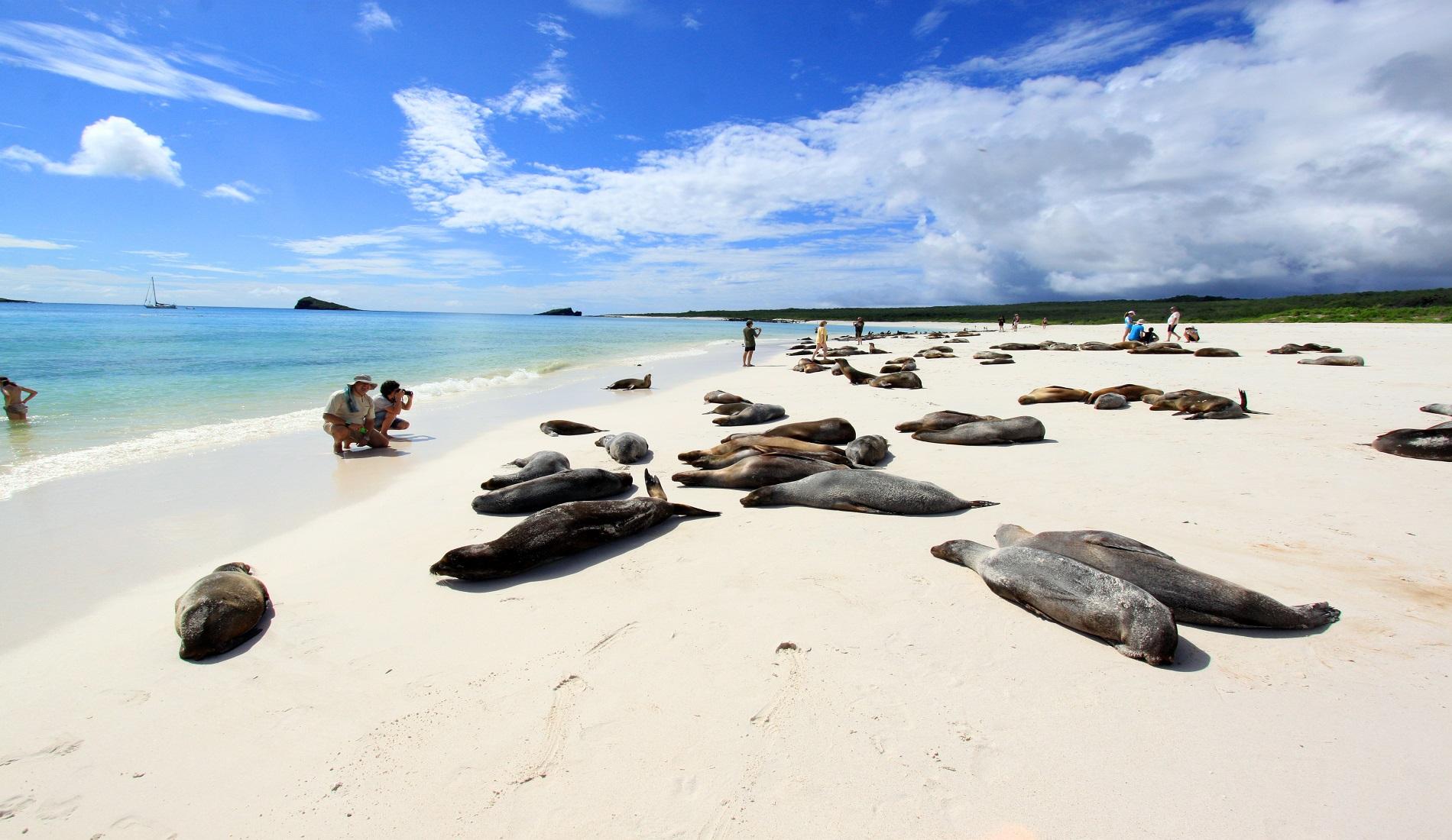 Española Gardner Bay rondreis galapagos eilanden
