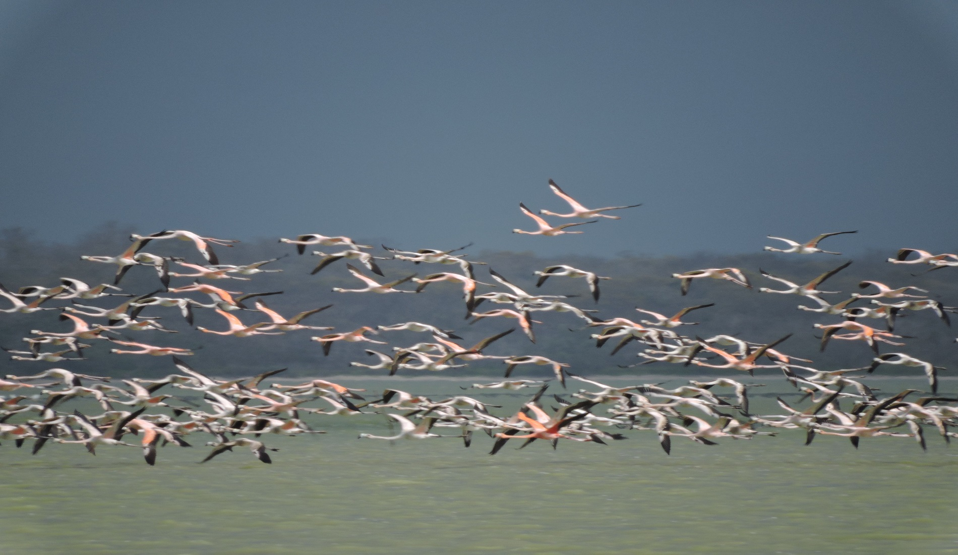 Flamingos Colombia