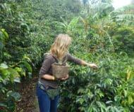 Koffieregio Colombia
