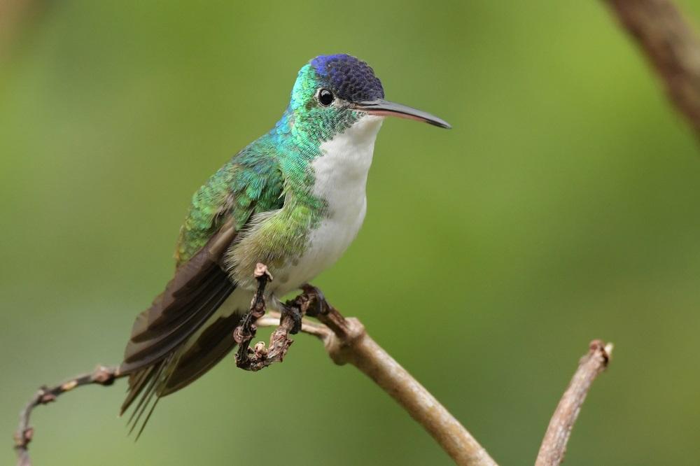 Kolibrie vogelreis colombia