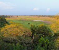 Landschap van de Pantanal