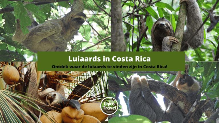 Luiaards in Costa Rica 11