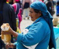 Otavalo cavia local