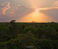 Landschap Pantanal