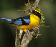 Omgeving Rio Blanco Tanager