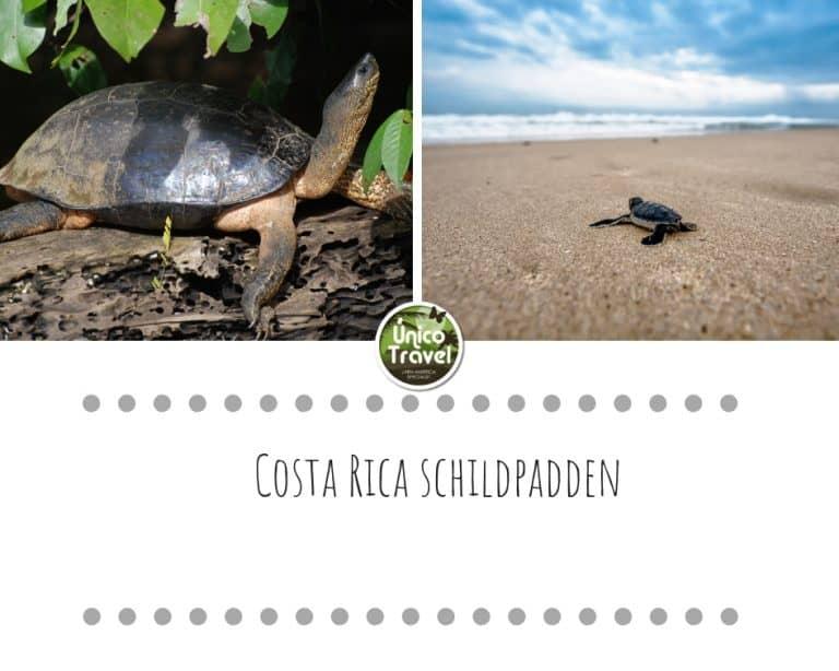 Schildpadden Costa Rica
