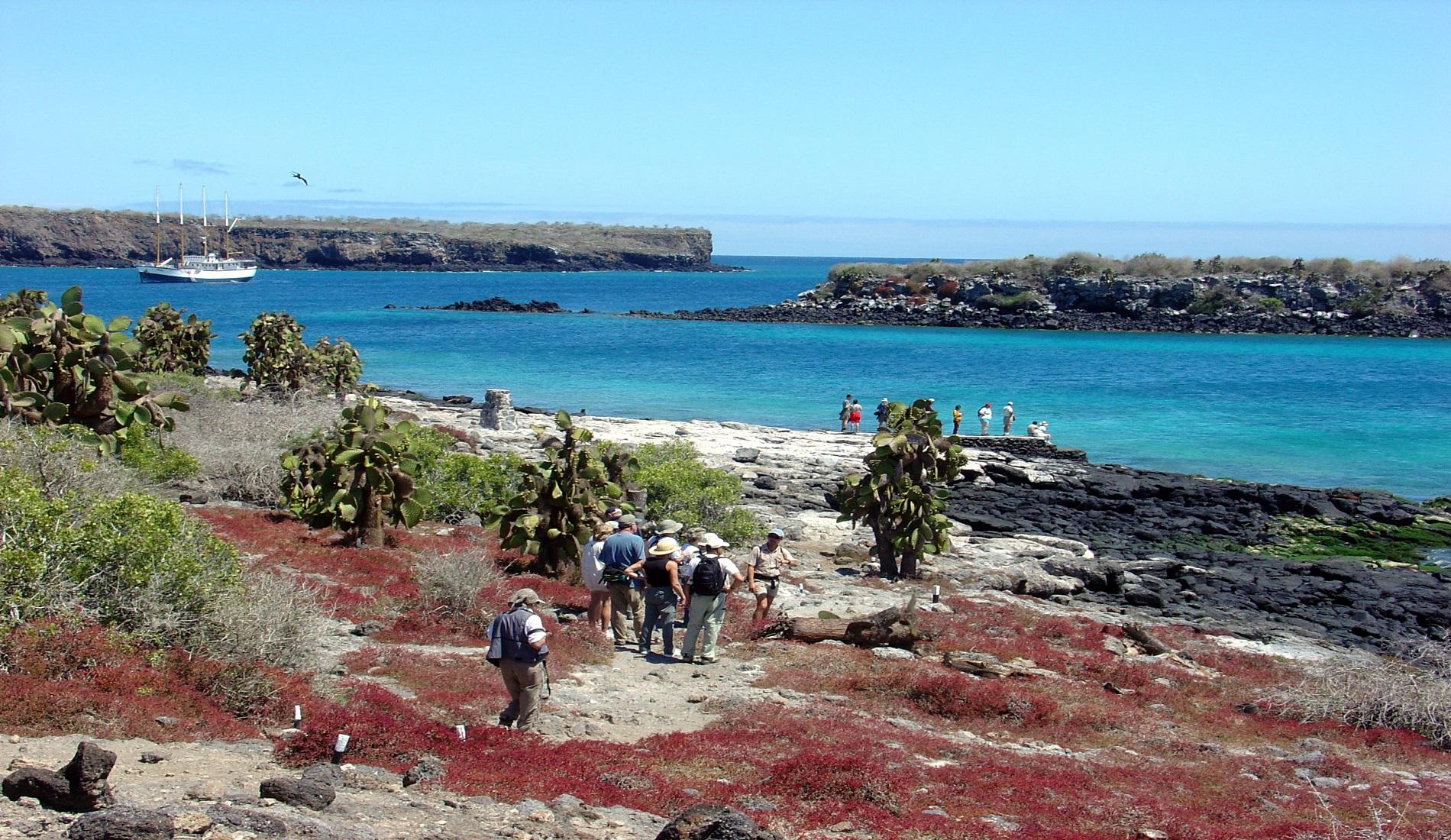 South Plazas Island eilandhoppen galapagos eilanden