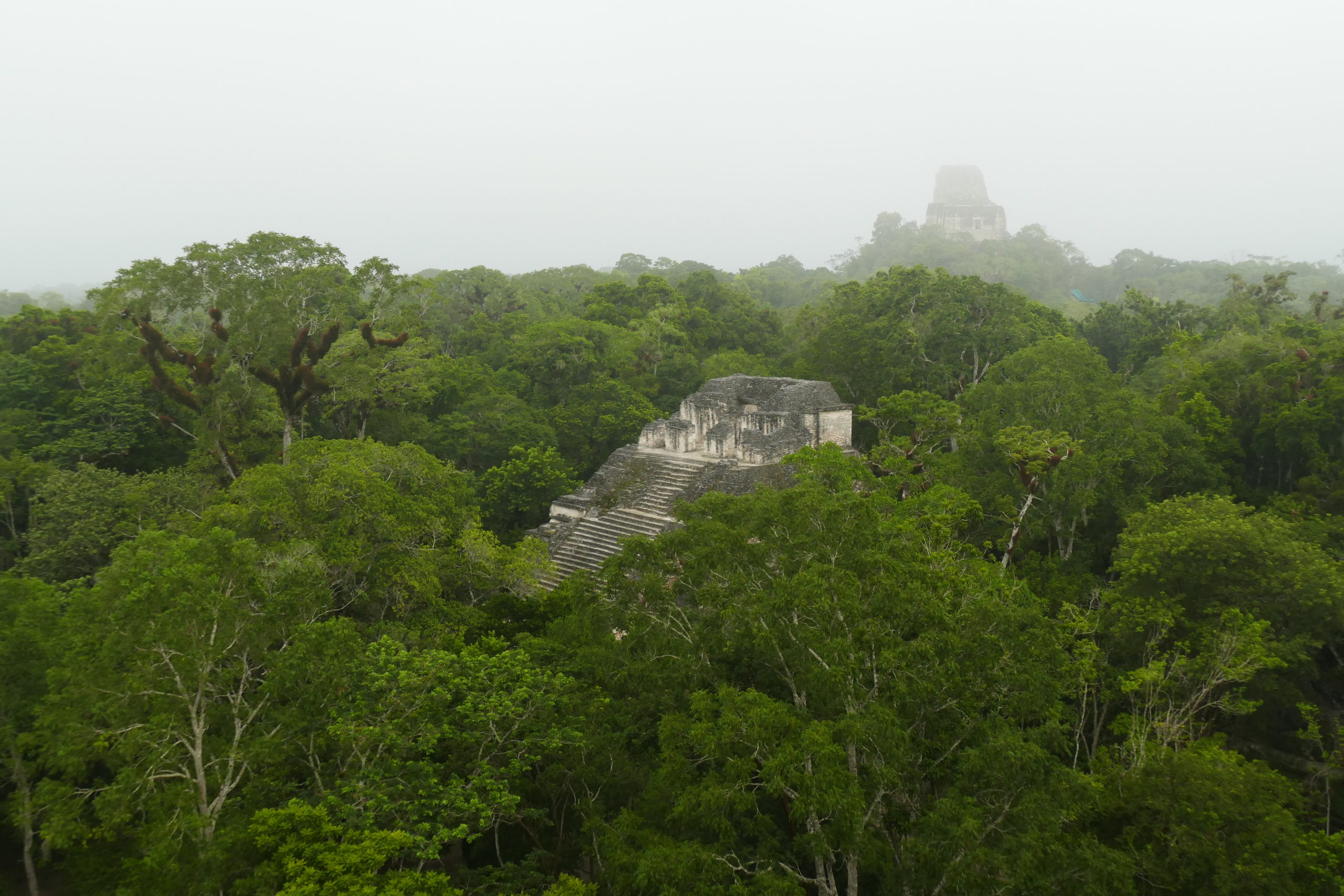 Tikal ervaring guatemala belize