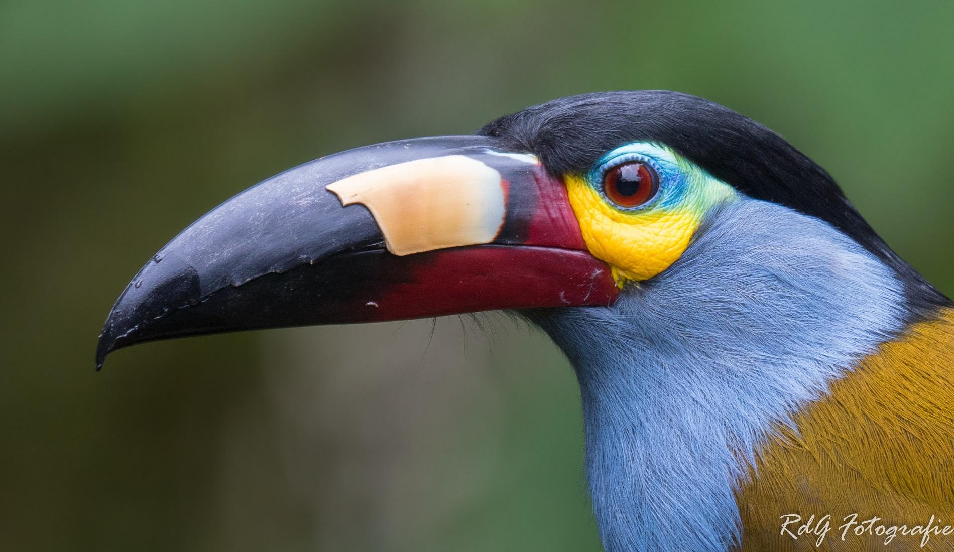Toekan amazone rondreis ecuador en galapagos