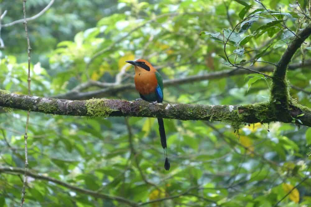 Vogels Costa Rica