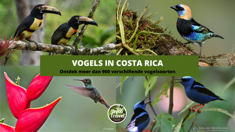 Vogels in Costa Rica