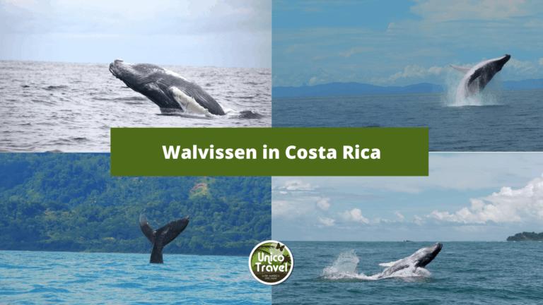 Walvissen in Costa Rica
