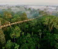 Canopy walk Amazone